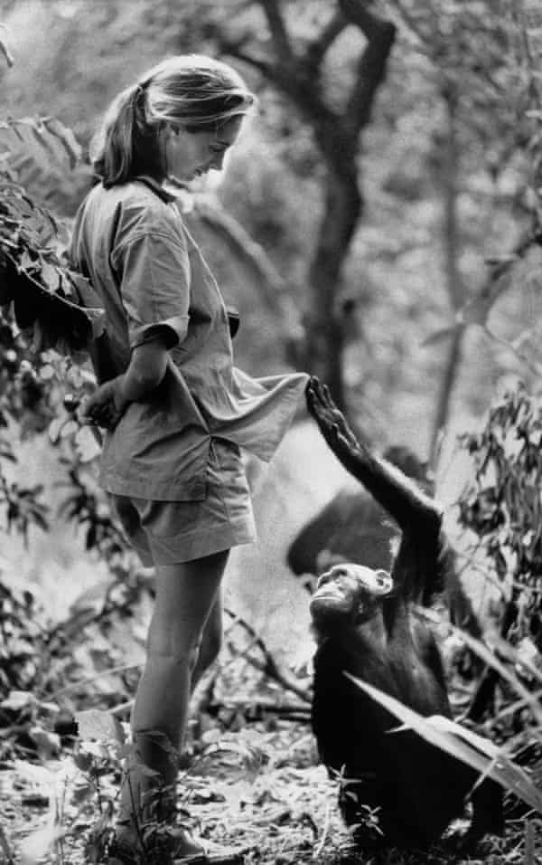 Jane Goodall and inquisitive friend, Gombe Stream Research Centre, Tanzania, January 1972.